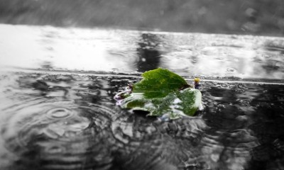 ploaie ploi