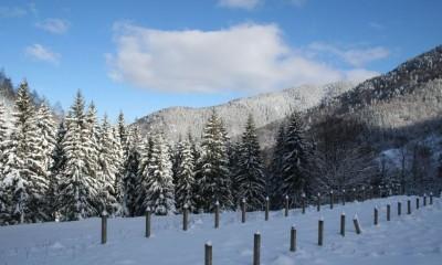 zapada-ninsoare