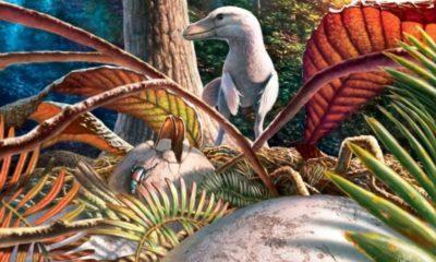 Reconstituirea modului de cuibărit al maniraptorelor cu ouă de tip Pseudogeckoolithus - Sursa: © Julius T. Csotonyi (Canada)